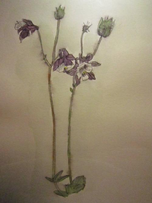 水茎の跡 side:美鈴