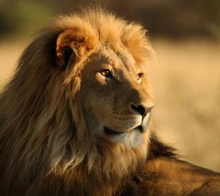 ミラ神の贈り物ー獅子の王子と心優しき姫ー
