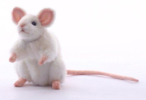 スクナビコナの冒険—小さな神が高天原を追放されネズミとともに地上に落っこちてしまった件—