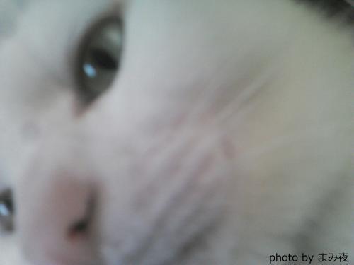 cat typing 〜猫と麦酒〜